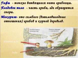 Гифы - тонкие ветвящиеся нити грибницы. Плодовое тело - часть гриба, где обра