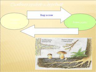 Симбиоз грибов и деревьев Грибница гриба Корни дерева Воду и соли Органически
