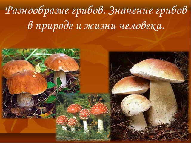 Разнообразие грибов. Значение грибов в природе и жизни человека.