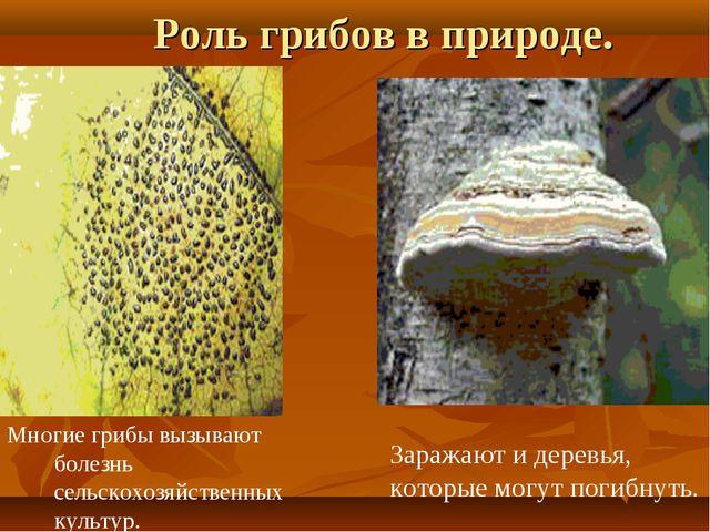 Роль грибов в природе. Заражают и деревья, которые могут погибнуть. Многие гр...