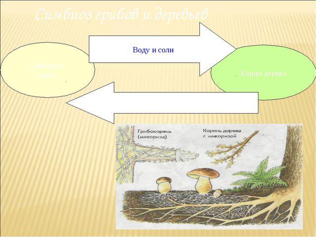 Симбиоз грибов и деревьев Грибница гриба Корни дерева Воду и соли Органически...