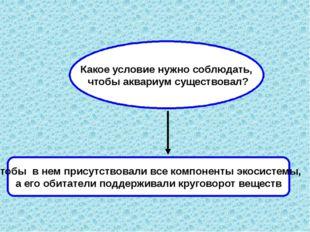Какое условие нужно соблюдать, чтобы аквариум существовал? Чтобы в нем присут