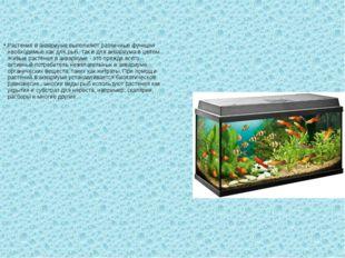 Растения в аквариуме выполняют различные функции необходимые как для рыб, так