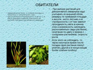 ОБИТАТЕЛИ Аквариумные растения - в основном выходцы из тропических и субтропи