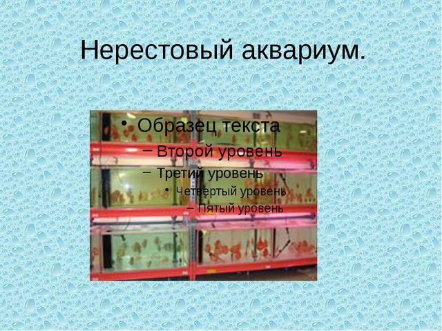 Нерестовый аквариум.
