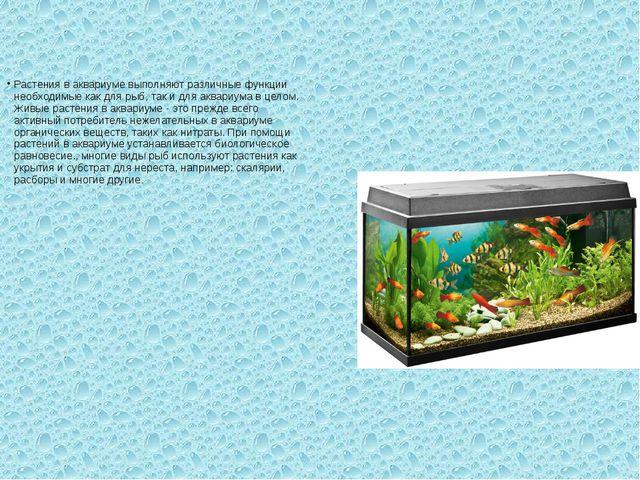 Растения в аквариуме выполняют различные функции необходимые как для рыб, так...