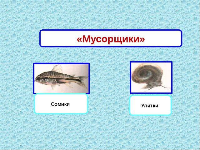 Сомики Улитки «Мусорщики»