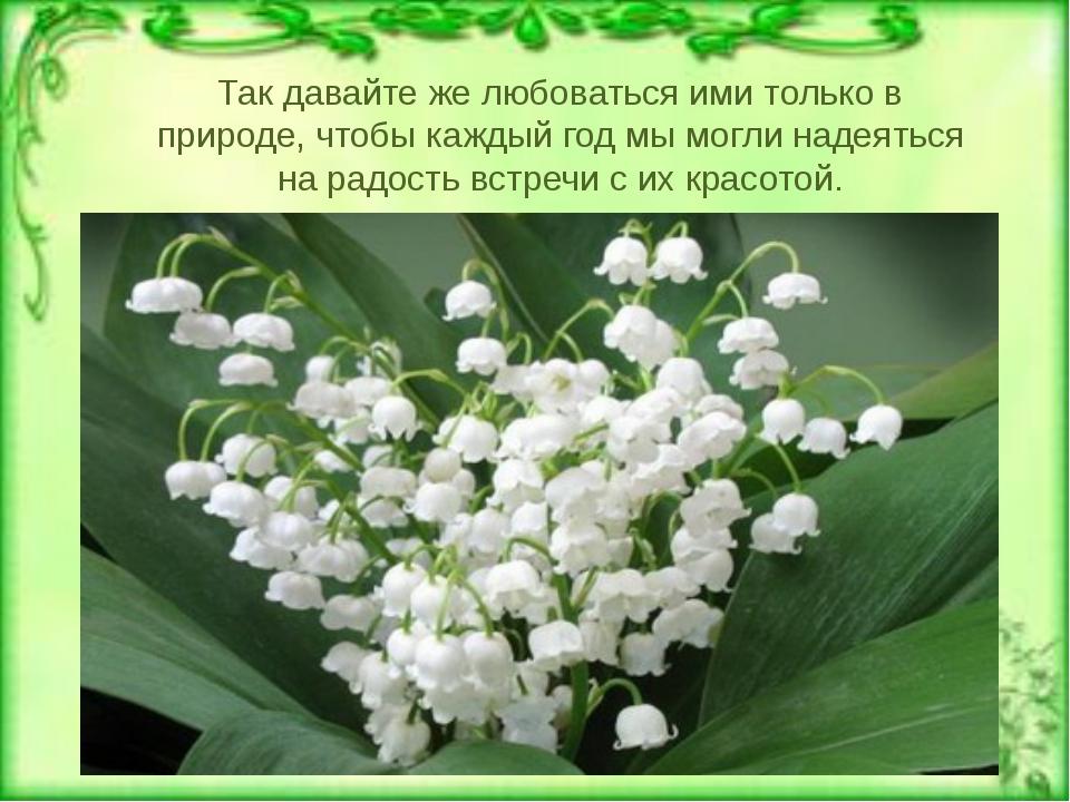 Тюльпан двуцветный
