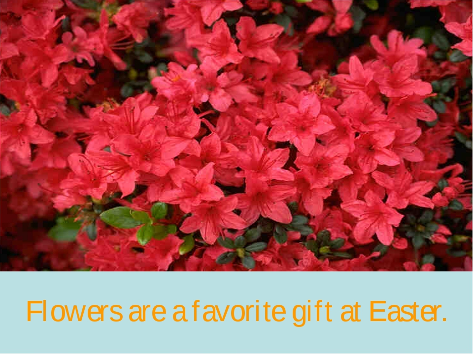 Flowers are a favorite gift at Easter.