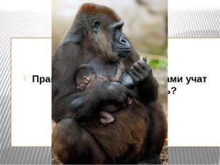 Правда ли, что обезьяны сами учат детей писать и читать?