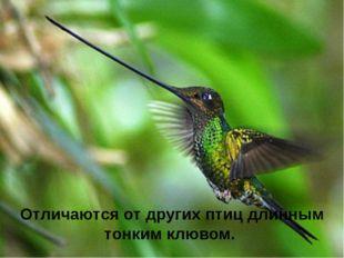 Отличаются от других птиц длинным тонкимклювом.