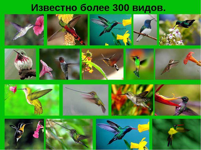 Известно более 300 видов.