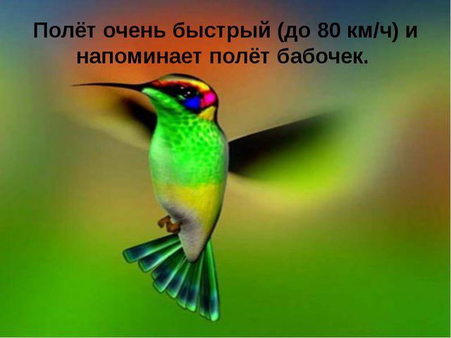 Полёт очень быстрый (до 80 км/ч) и напоминает полёт бабочек.