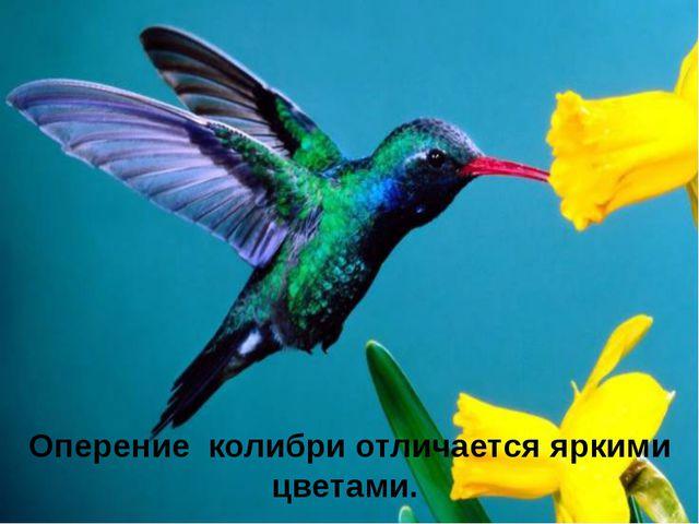 Оперение колибри отличается яркими цветами.
