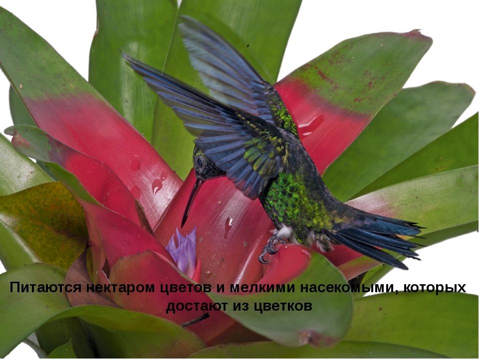Питаются нектаром цветов и мелкими насекомыми, которых достают из цветков