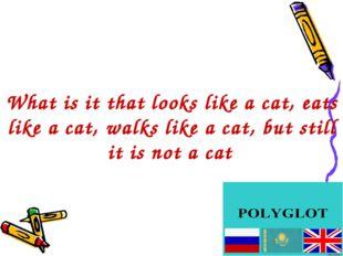 What is it that looks like a cat, eats like a cat, walks like a cat, but stil