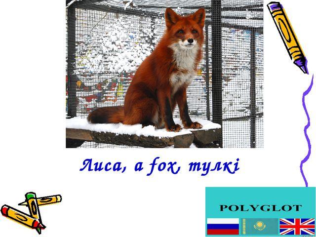 Лиса, a fox, түлкі
