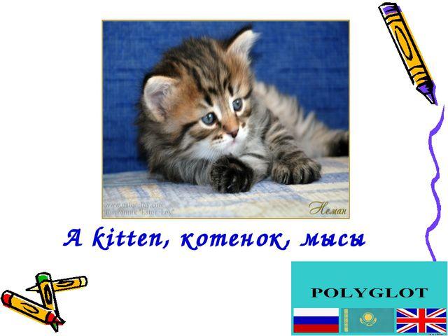 А kitten, котенок, мысық