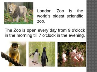 The Zoo is open every day from 9 o'clock in the morning till 7 o'clock in the