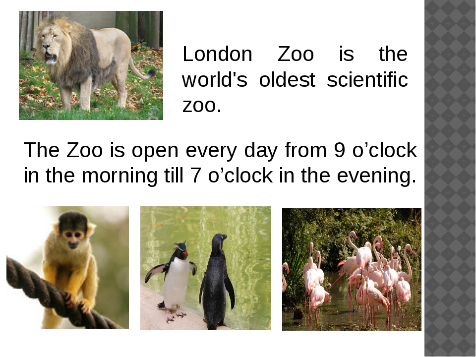 The Zoo is open every day from 9 o'clock in the morning till 7 o'clock in the...