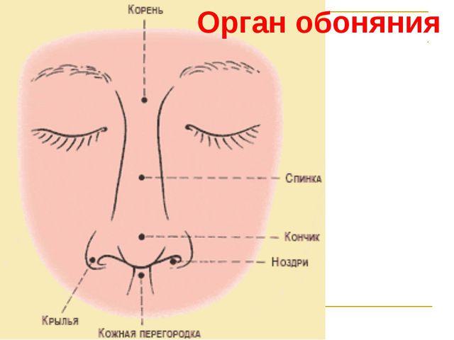 Орган обоняния