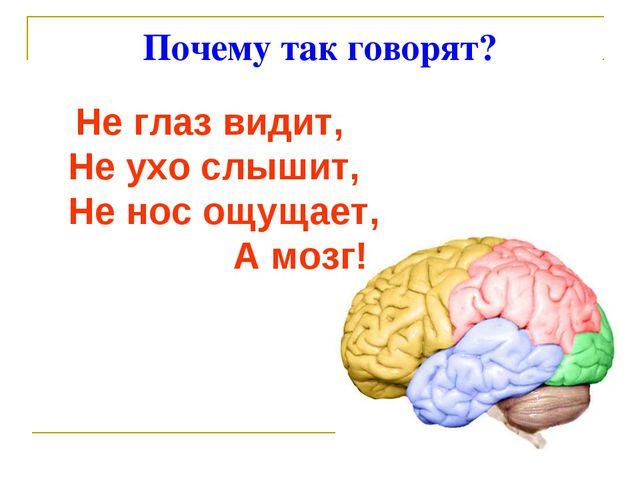 Почему так говорят? Не глаз видит, Не ухо слышит, Не нос ощущает, А мозг!