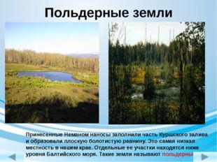 Польдерные земли Принесенные Неманом наносы заполнили часть Куршского залива