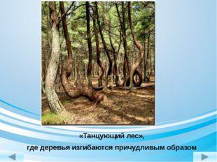 «Танцующий лес», где деревья изгибаются причудливым образом http://www.livein