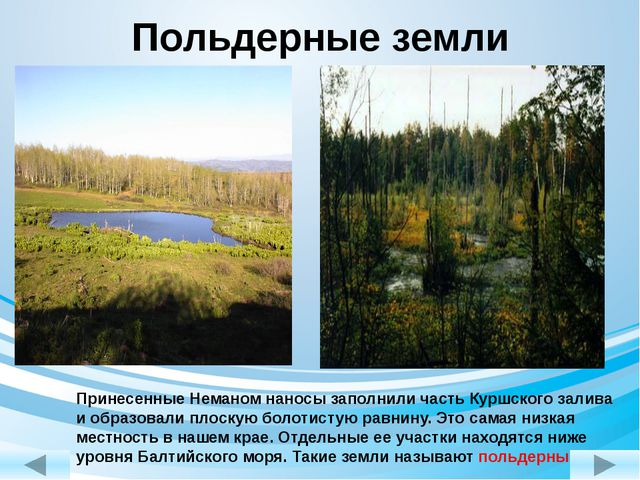 Польдерные земли Принесенные Неманом наносы заполнили часть Куршского залива...