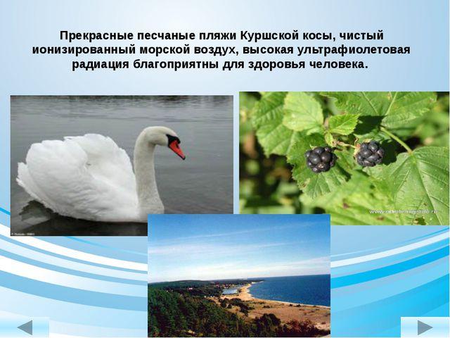 Прекрасные песчаные пляжи Куршской косы, чистый ионизированный морской воздух...