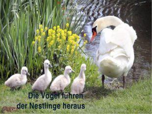 Die Vögel führen der Nestlinge heraus
