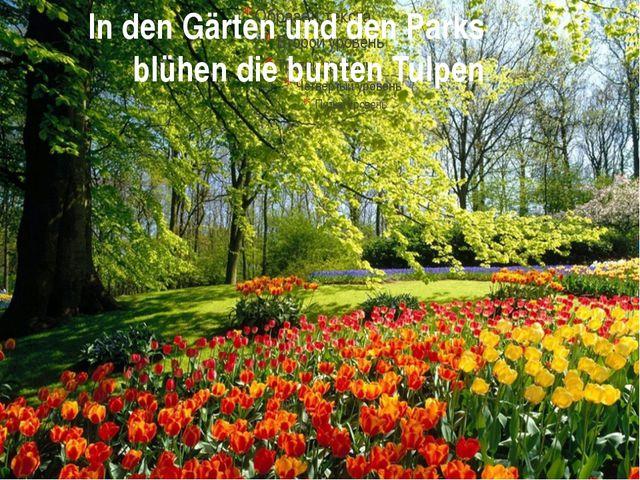 In den Gärten und den Parks blühen die bunten Tulpen