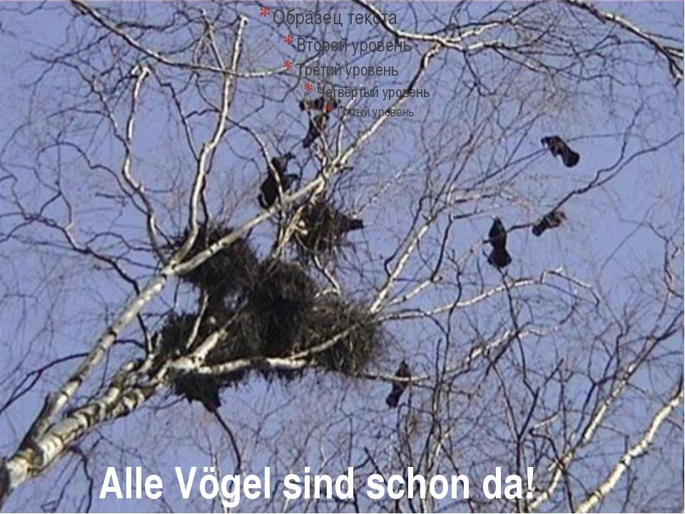 Alle Vögel sind schon da!