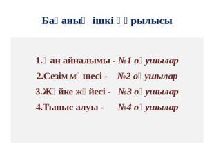 Бақаның ішкі құрылысы 1.Қан айналымы - №1 оқушылар 2.Сезім мүшесі - №2 оқушыл