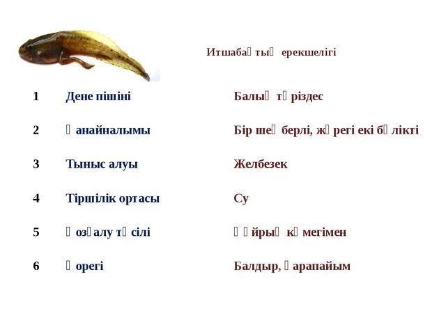 Итшабақтың ерекшелігі 1 Дене пішіні Балық тәріздес 2 Қанайналымы Бір шеңберлі...