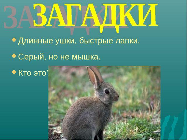 Длинные ушки, быстрые лапки. Серый, но не мышка. Кто это?