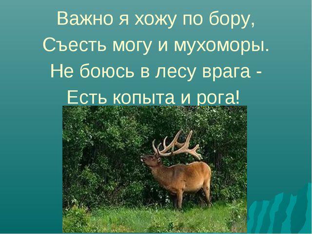 Важно я хожу по бору, Съесть могу и мухоморы. Не боюсь в лесу врага - Есть к...