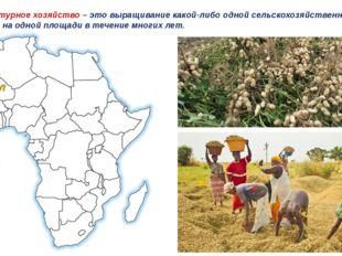 Монокультурное хозяйство – это выращивание какой-либо одной сельскохозяйствен