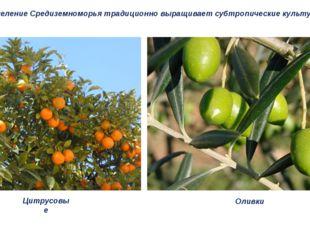 Население Средиземноморья традиционно выращивает субтропические культуры. Цит