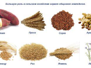 Большую роль в сельском хозяйстве играет общинное земледелие. Батат Просо Сор