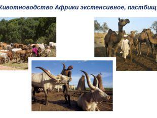 Животноводство Африки экстенсивное, пастбищное.