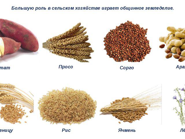 Большую роль в сельском хозяйстве играет общинное земледелие. Батат Просо Сор...