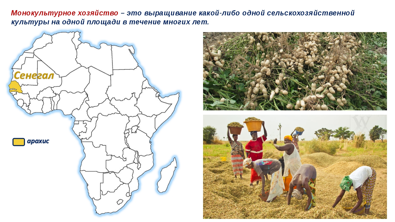Монокультурное хозяйство – это выращивание какой-либо одной сельскохозяйствен...