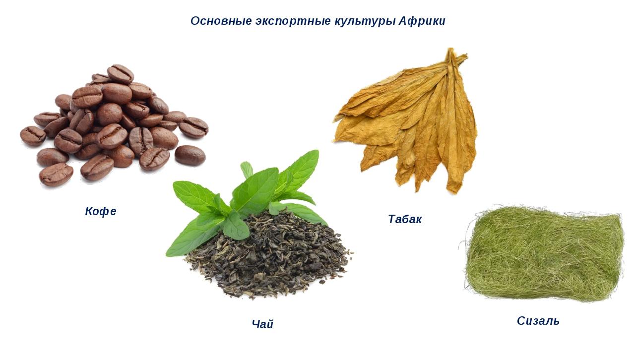 Основные экспортные культуры Африки Кофе Чай Табак Сизаль
