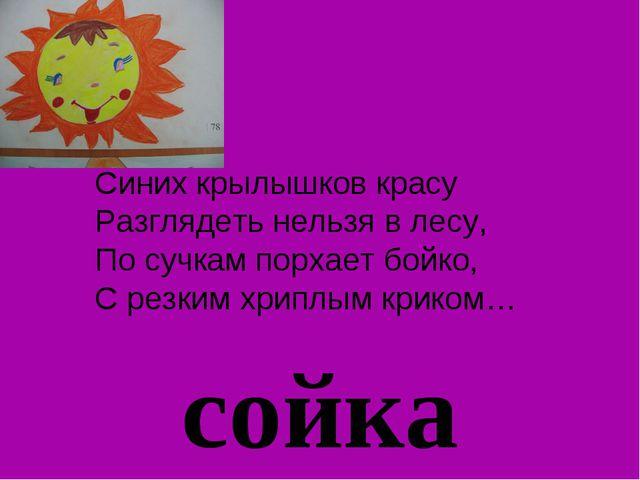 сойка Синих крылышков красу Разглядеть нельзя в лесу, По сучкам порхает бойко...