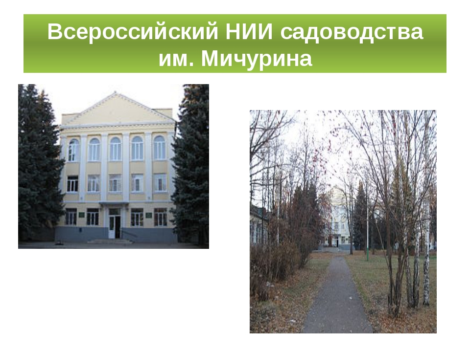 Всероссийский НИИ садоводства им. Мичурина