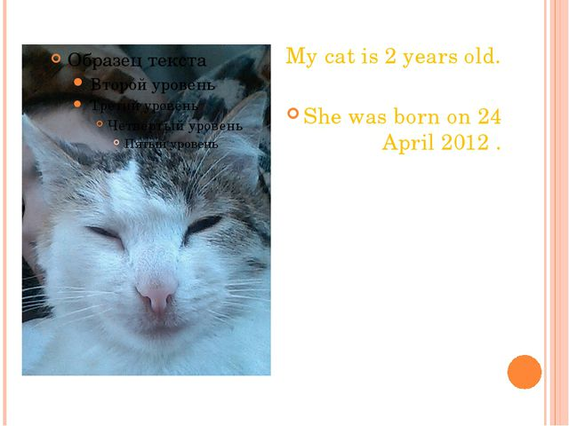 My cat is 2 years old. She was born on 24 April 2012 .