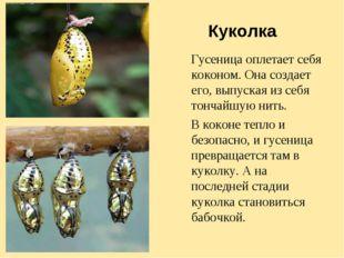Куколка Гусеница оплетает себя коконом. Она создает его, выпуская из себя тон