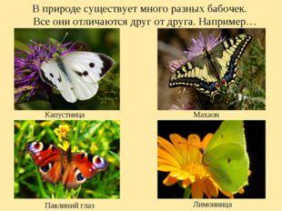 В природе существует много разных бабочек. Все они отличаются друг от друга.