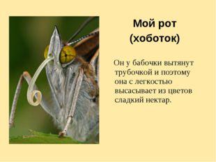 Мой рот (хоботок) Он у бабочки вытянут трубочкой и поэтому она с легкостью вы